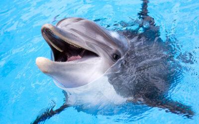 Spotkania z delfinami